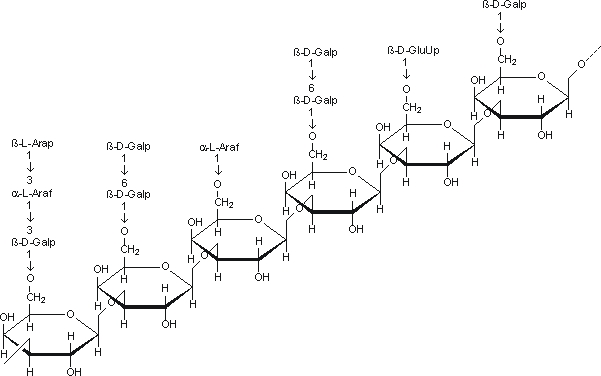 Arabinogalactan: Structure | Pilgaard Polymers